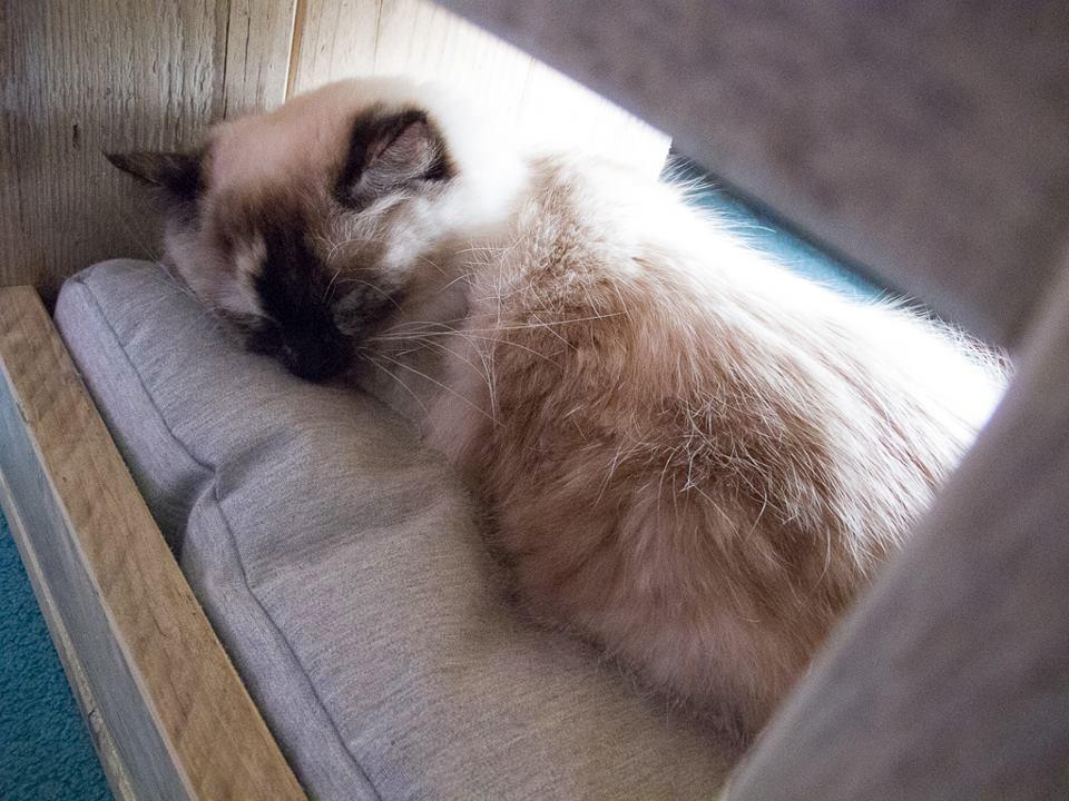 süße katze schläft